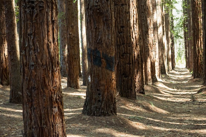 Discover the Redwood Forest in East Warburton (2018 ...